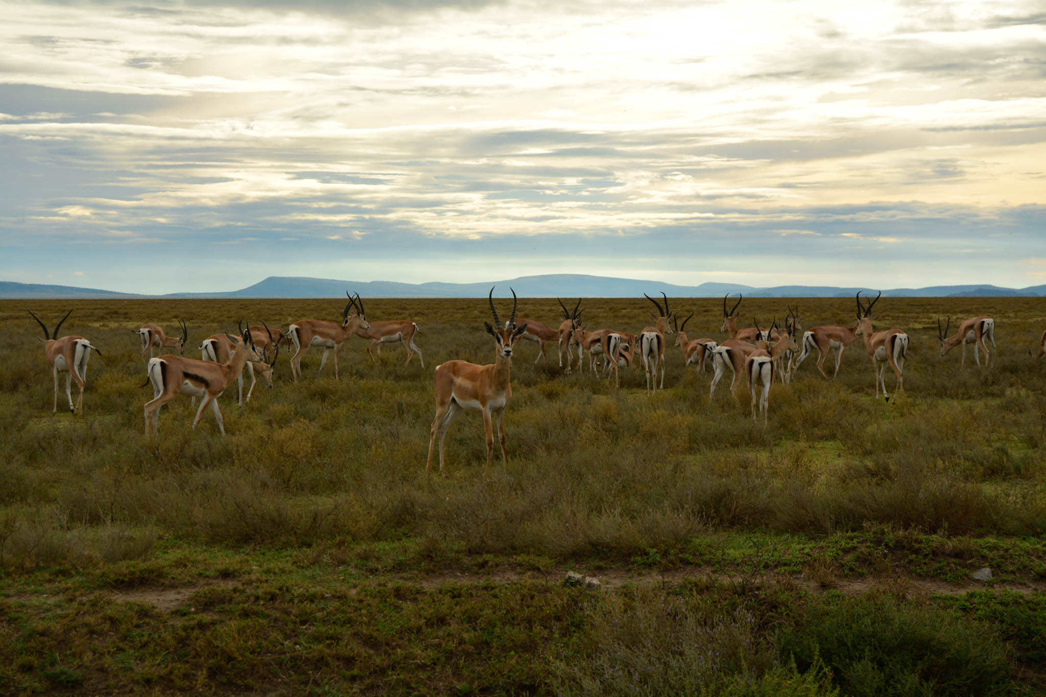 These guys welcome you to the Serengeti